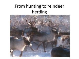 From hunting to reindeer herding