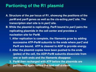 Partioning of the R1 plasmid