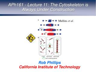APh161 - Lecture 11: The Cytoskeleton is Always Under Construction