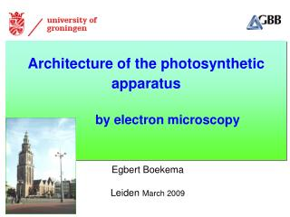 Architecture of the photosynthetic  apparatus             by electron microscopy