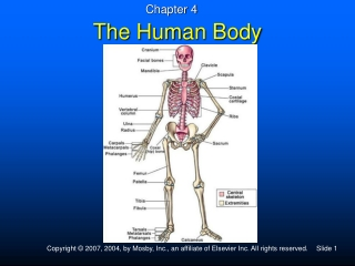 UNIT 9 Fundamentals of the Nervous System and Nervous Tissue Chapter 11