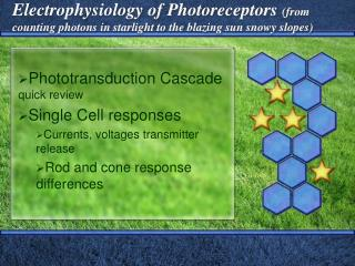 Phototransduction Cascade  quick review Single Cell responses