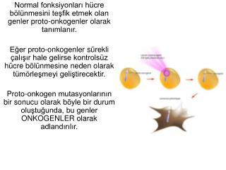 Proto-onkogenler