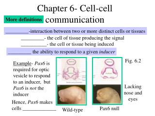 Chapter 6- Cell-cell communication