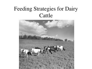 Feeding Strategies for Dairy Cattle
