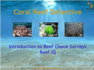 Coral Reef Detective Introduction to Reef Check Surveys Reef IQ