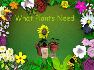 What Plants Need