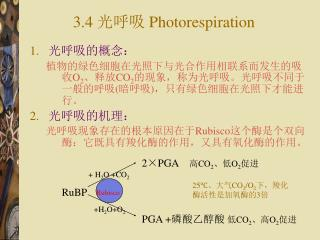 3.4  光呼吸  Photorespiration