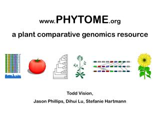 PHYTOME  a plant comparative genomics resource