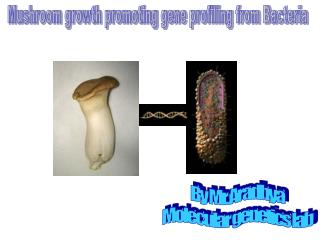 Mushroom growth promoting gene profiling from Bacteria