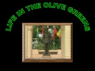 LIFE IN THE OLIVE GREENS