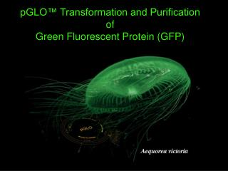 pGLO™ Transformation and Purification of  Green Fluorescent Protein (GFP)