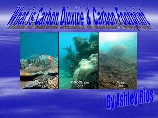 What is Carbon Dioxide & Carbon Footprint