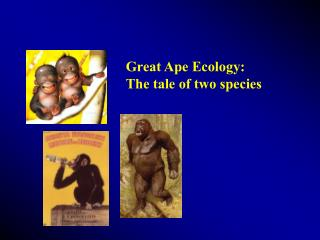 Great Ape Ecology:  The tale of two species