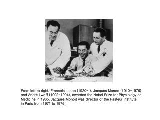 From left to right: Francois Jacob (1920- ), Jacques Monod (1910-1976)