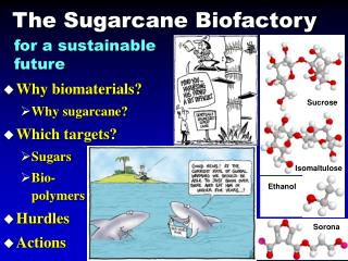 The Sugarcane Biofactory