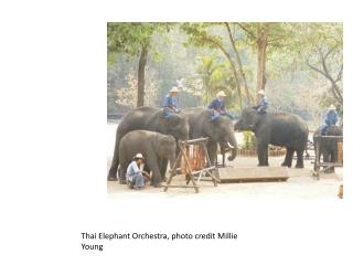 Thai Elephant Orchestra, photo credit Millie Young