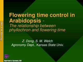 Flowering time control in Arabidopsis  - The relationship between  phyllochron and flowering time