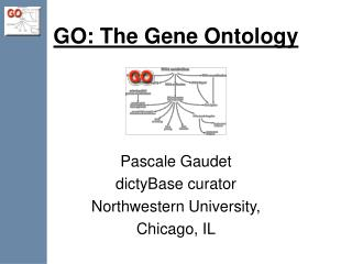 GO: The Gene Ontology