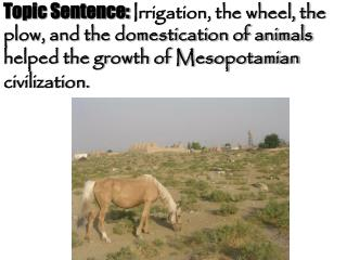 Main Point #1:  First, irrigation helped the growth of Mesopotamian civilization.