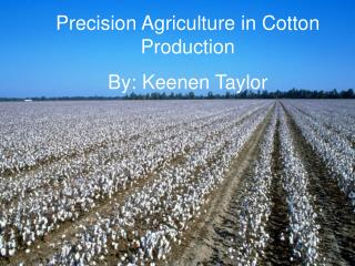 Precision Agriculture in Cotton Production By: Keenen Taylor