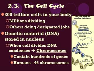2.3: The Cell Cycle