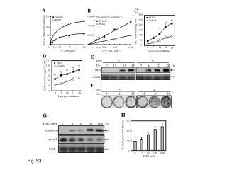 14 C-[AA] (pmol/10 6 cells/min)