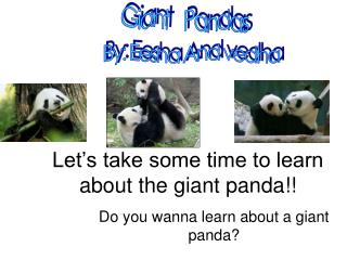 Let's take some time to learn about the giant panda!!