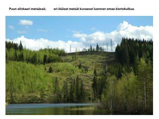 Puun elinkaari metsässä: