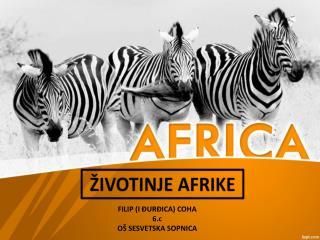 ŽIVOTINJE AFRIKE