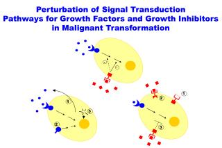 Perturbation of Signal Transduction