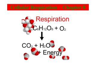 Cellular Respiration – Chapter 8