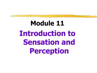 Module 11 Introduction to Sensation and Perception