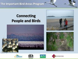 The Important Bird Areas Program