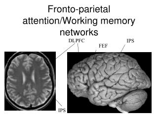 Fronto-parietal attention/Working memory networks