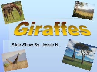 Slide Show By: Jessie N.
