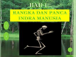 RANGKA DAN PANCA INDRA MANUSIA
