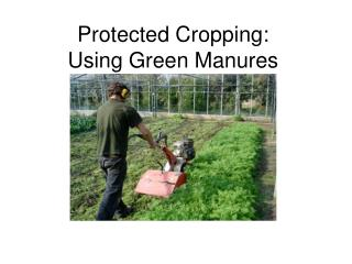 Protected Cropping: Using Green Manures