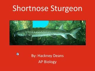 Shortnose Sturgeon