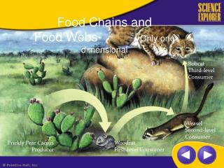 Food Chains and Food Webs-           Only one dimensional