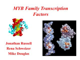 MYB Family Transcription Factors