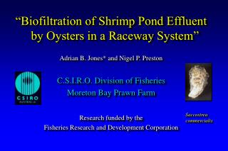 """Biofiltration of Shrimp Pond Effluent by Oysters in a Raceway System"""