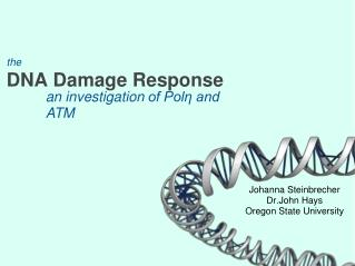 the DNA Damage Response