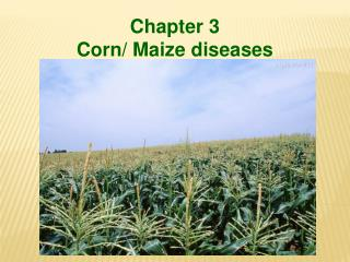 Chapter 3  Corn/ Maize diseases