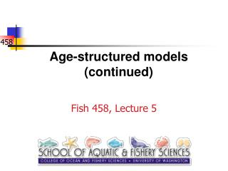Age-structured models (continued)