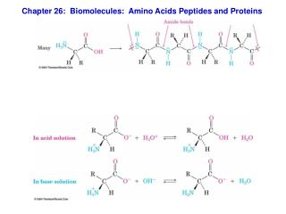 Chapter 26:  Biomolecules:  Amino Acids Peptides and Proteins