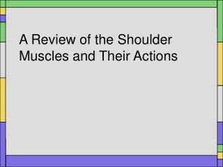 A Review of the Shoulder Muscles and Their Actions