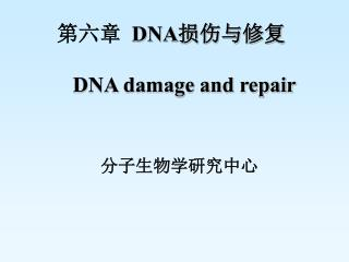 第六章   DNA 损伤与修复    DNA damage and repair