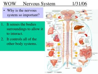 WOW   	Nervous System		1/31/06