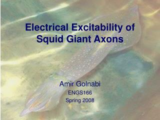 Electrical Excitability of Squid Giant Axons